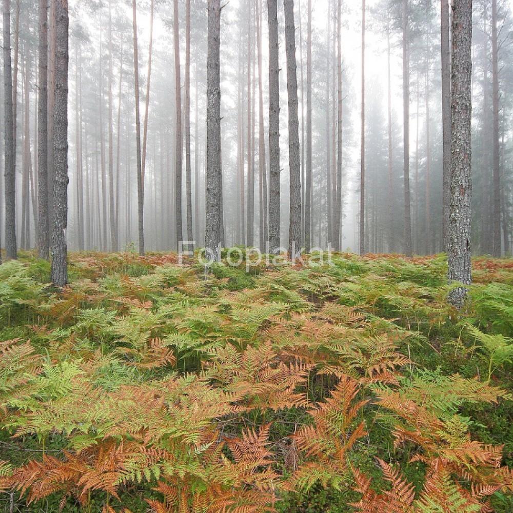 Metsaalune_2711